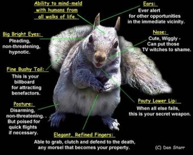 Squirrel diagram!