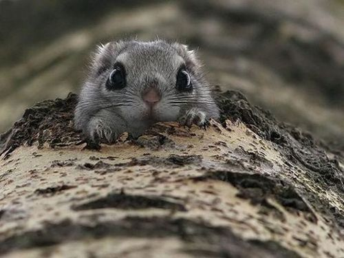 cutebaby-squirrel-paws.jpg